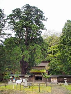 P5040127若狭姫神社.jpg